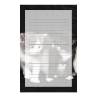 Kittens in a Studio Shot Stationery