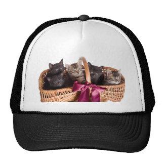 kittens in a wicker basket cap