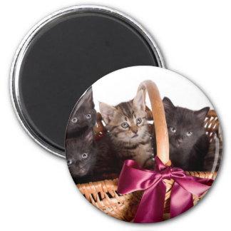 kittens in a wicker basket magnet