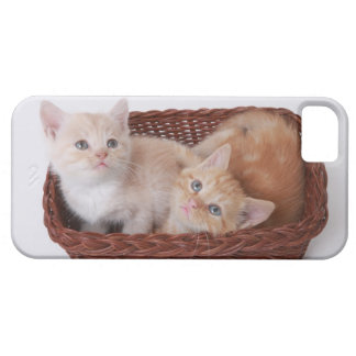 Kittens in basket iPhone 5 cover