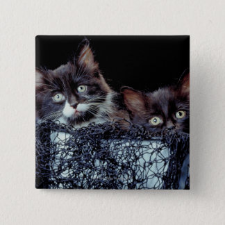 Kittens in container 15 cm square badge