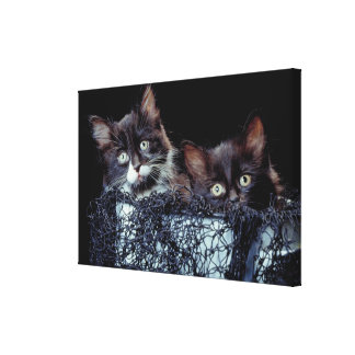 Kittens in container canvas print