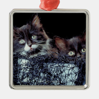 Kittens in container christmas ornament