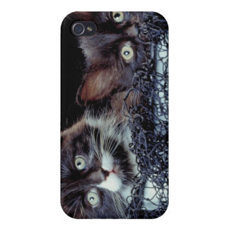 Kittens in container iPhone 4 cases
