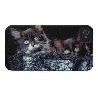 Kittens in container iPhone 4 covers