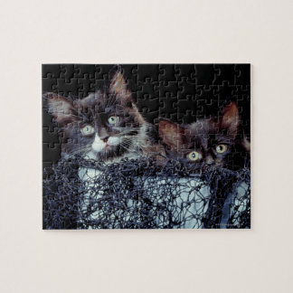 Kittens in container jigsaw puzzle