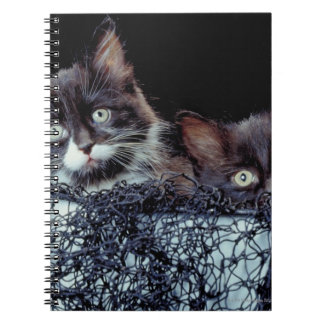 Kittens in container notebook
