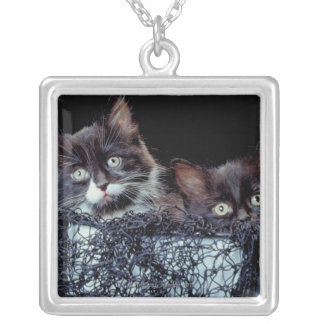 Kittens in container silver plated necklace