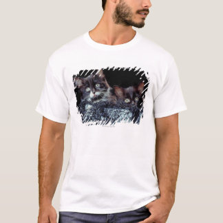 Kittens in container T-Shirt
