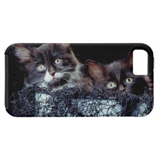 Kittens in container tough iPhone 5 case