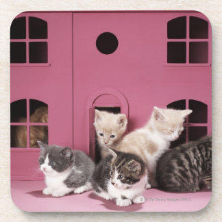 Kittens in doll's house coaster