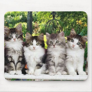kittens in garden mousepad