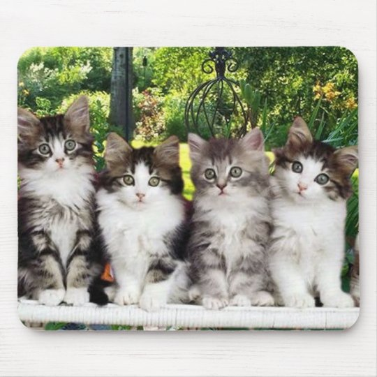 kittens in garden mousepad