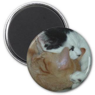 Kittens in Love Magnets