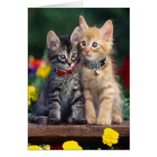 Kittens In The Garden Card