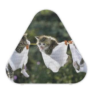 Kittens in underwear on clothesline
