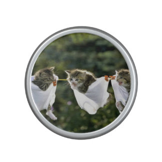 Kittens in underwear on clothesline speaker