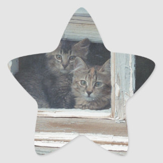 Kittens in Window Star Sticker