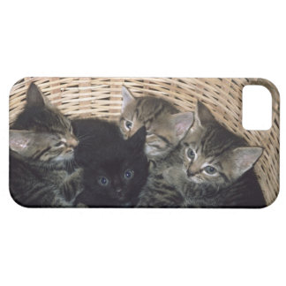 kittens iPhone 5 cases