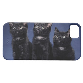 Kittens iPhone 5 Cover