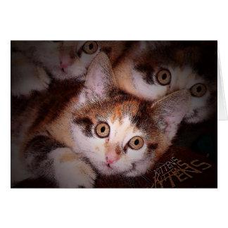 Kittens,Kittens,Kittens Greeting Card