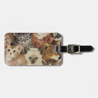 Kittens Luggage Tag