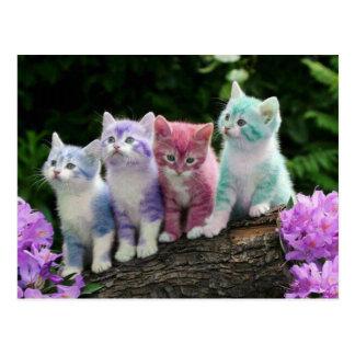 kittens met kleur wens kaart