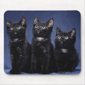 Kittens Mouse Mat