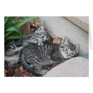 Kittens Note Card