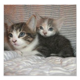 Kittens on a Blanket Photo Art