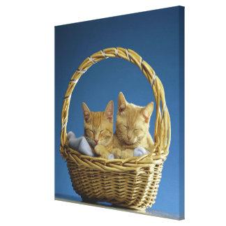 Kittens sleeping in basket canvas print