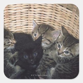 kittens square sticker