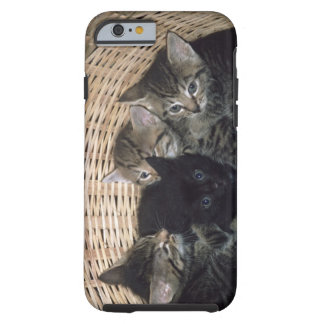 kittens tough iPhone 6 case