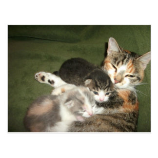 Kittens With Mommy Postcard