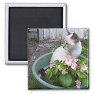 Kittie and Flower Pot Square Magnet