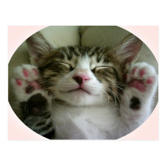 Kittie Fun Postcard