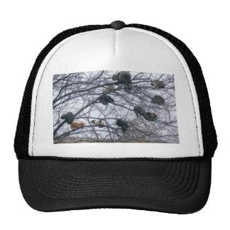 kitties cap