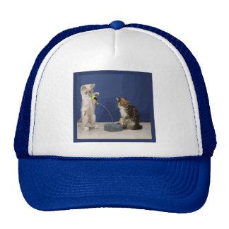 Kitties Playing Cap