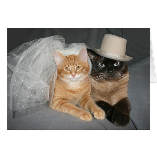 Kitty bride and groom card