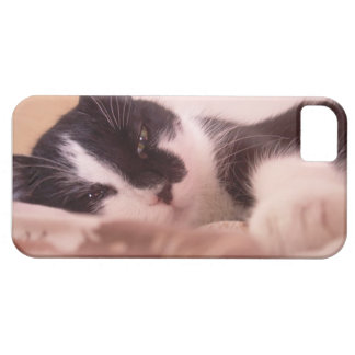 Kitty Case For The iPhone 5