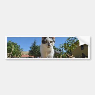 Kitty Cat Adventure Bumper Stickers