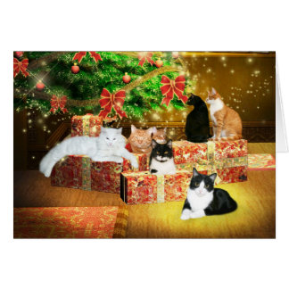 Kitty cat Christmas Cards