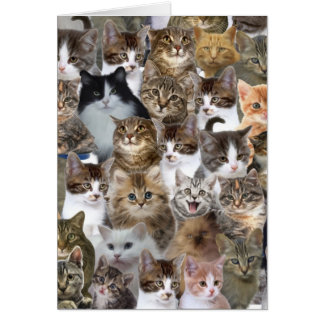 Kitty Cat Faces Pattern Greeting Card