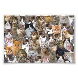 Kitty Cat Faces Pattern Photo Print