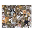 Kitty Cat Faces Pattern Postcard