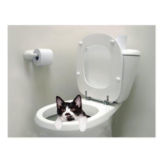 Kitty cat in toilet bowl postcard