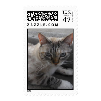 Kitty Cat Postage Stamp