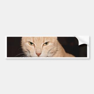 Kitty Cat Smile Bumper Sticker