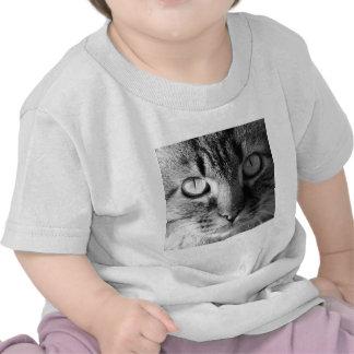 Kitty Cat Tshirts