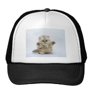 kitty mesh hats